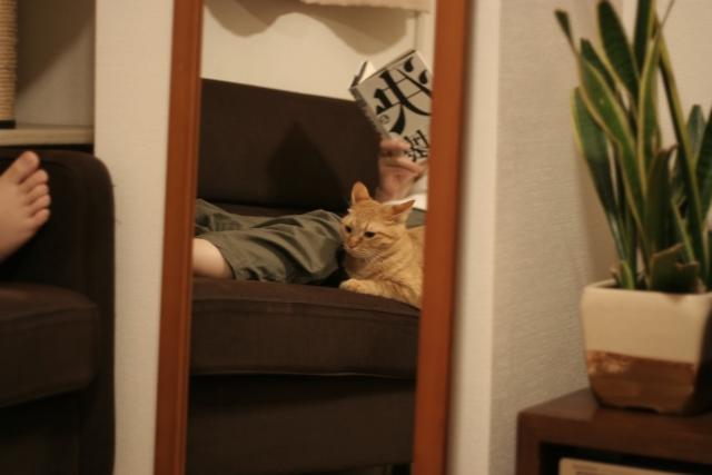 名古屋でペットOKのシェアハウスに住みたい!だったらここで探そう