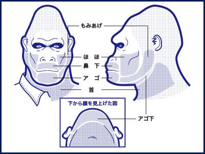 ゴリラクリニックヒゲの部位説明の画像